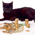 save-money-pet-cat