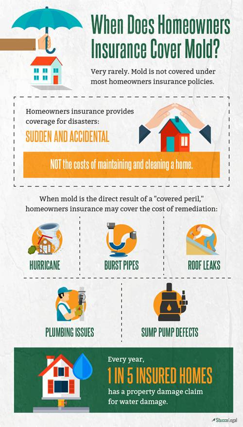 When Does Homeowner S Insurance Cover Mold Infographic